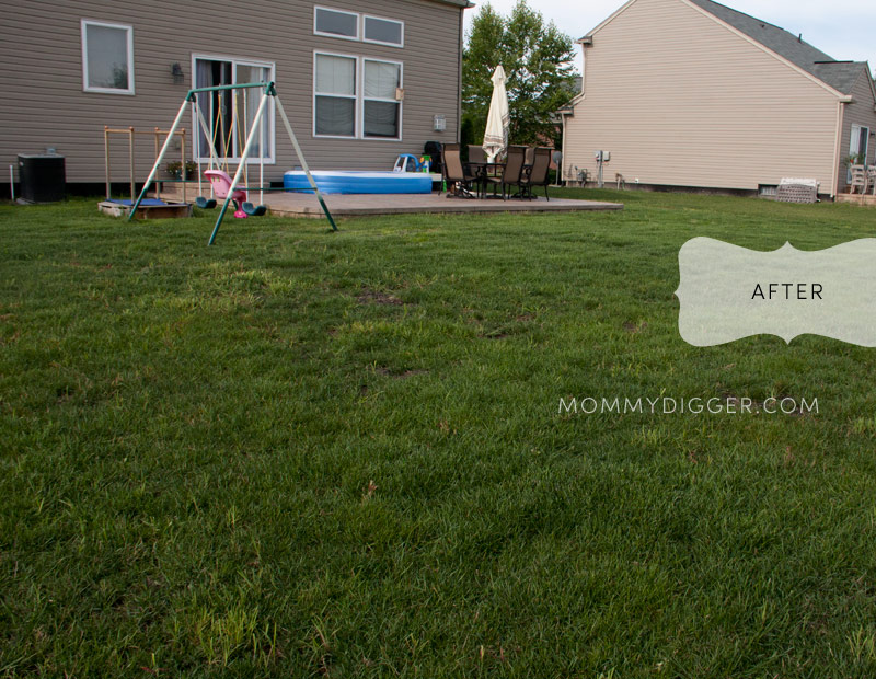 TruGreen Lawn Care After